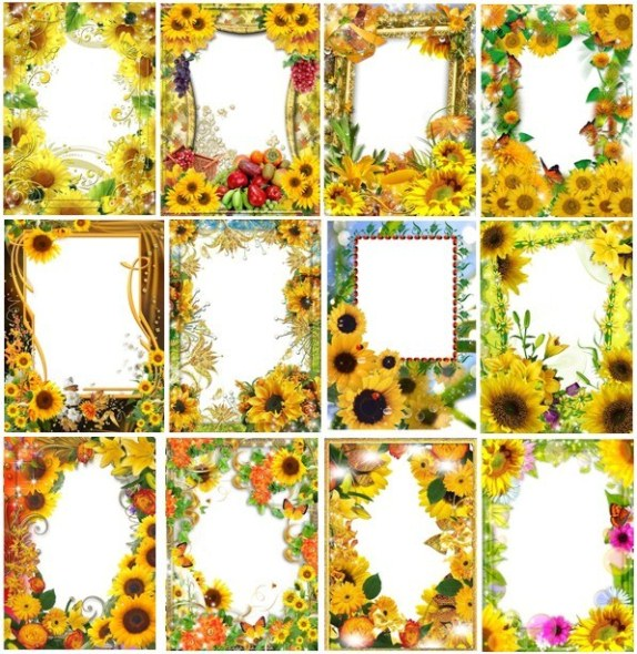 Frames with sunflowers for a photo