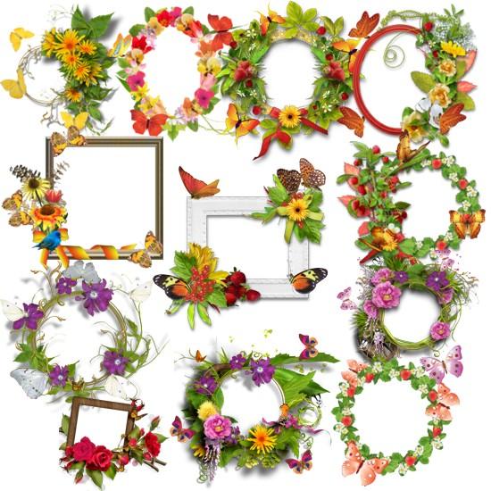 Літні рамки з метеликами png