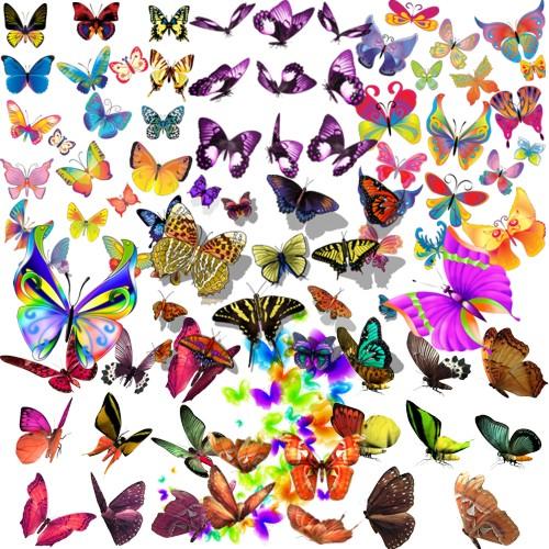 Яскраві метелики png