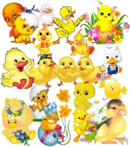 Каченята і курчата png